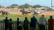 Horse Racing Experience at the Garrison Savannah Racetrack, Barbade