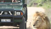 5 day Kruger Park open vehicle safari and activities tour, Kruger National Park, Multi-day Tours