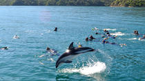 Half-Day Dolphin Eco-Tour from Picton, Picton, Swim with Dolphins