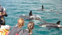 Half-Day Dolphin Viewing Eco-Tour from Picton, Picton, Nature & Wildlife