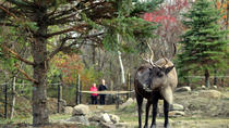 Ecomuseum Zoo: Discover Québec's Wildlife in Summer, Montreal, Zoo Tickets & Passes