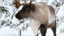 Ecomuseum Zoo: Discover Québec's Wildlife in Winter, Montreal