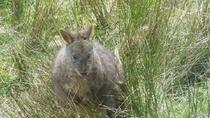 Leven Canyon Day Trip Including Wings Wildlife Park or Gunns Plains Caves from Devonport, ...