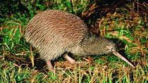 Akaroa Shore Excursion: Banks Peninsula, Christchurch City Tour and Willowbank Wildlife Reserve,...