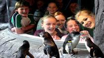 Akaroa Shore Excursion: Banks Peninsula, Christchurch City Tour and the International Antarctic...