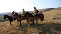 Christchurch Horse Trekking, Christchurch, Multi-day Tours