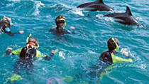 Kaikoura Swim with Dolphins Tour from Christchurch, Christchurch, Day Trips