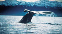 Kaikoura Whale Watch Tour from Christchurch including Coastal Pacific Train Journey, Christchurch