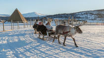 Reindeer Feeding, Sami Culture and Short Reindeer Sledding, Tromso, Half-day Tours
