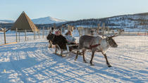 Reindeer Feeding, Sami Culture, and Short Reindeer Sledding Tour from Tromso, Tromso, Half-day Tours