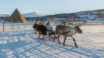 Reindeer Feeding, Sami Culture and Short Reindeer Sledding Tour in Tromso, Tromso, Half-day Tours