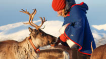 Reindeer Sledding, Feeding, and Sami Culture Tour from Tromso, Tromso, Half-day Tours
