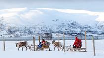 Reindeer Sledding, Feeding and Sami Culture Tour in Tromso, Tromso, Half-day Tours
