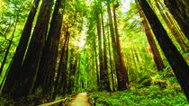 Muir Woods Hiking Tour from Marin, San Francisco, Hiking & Camping