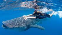 Swim with Whale Sharks from Playa del Carmen, Playa del Carmen, 4WD, ATV & Off-Road Tours