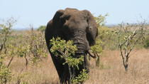 Kruger National Park and Panorama Tour Combo from Hazyview, Kruger National Park, Attraction Tickets