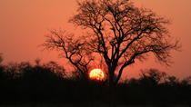 Kruger National Park Sunset Safari, Kruger National Park, Nature & Wildlife