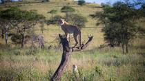 10-Day Serengeti Wildebeest Migration Safari from Arusha, Arusha