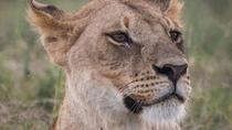 3-Day Selous Reserve mid-Range Safari, Dar es Salaam, Multi-day Tours