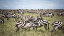 3-Day Serengeti Safari from Arusha, Arusha, Multi-day Tours