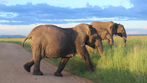 6-Day Best of Tanzania Budget Safari from Arusha, Arusha, Multi-day Tours