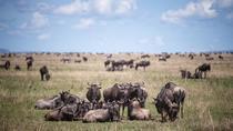 7-Night Great Wildebeest Calving Migration Safari from Arusha, Arusha, Multi-day Tours