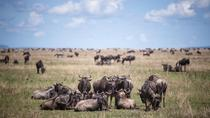 8-Day Great Wildebeest Calving Migration Safari from Arusha, Arusha, Multi-day Tours