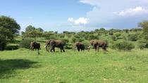 Multi-Day Tanzania Odssey Safari from Arusha, Arusha, Multi-day Tours