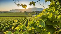 Sparkling Franciacorta Wine Tour with Lunch and Wineries Visit, Milan, Day Trips