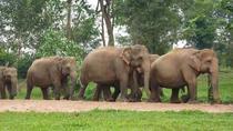 Kuala Gandah Elephant Sanctuary and Batu Caves Tour from Kuala Lumpur with Lunch, Kuala Lumpur, Day...