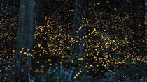 Kuala Selangor Fireflies River Ride Including Dinner from Kuala Lumpur, Kuala Lumpur, Night Cruises