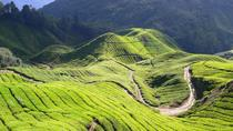 Private Cameron Highlands with Batu Caves from Kuala Lumpur, Kuala Lumpur, Private Day Trips