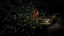 Private Mangrove Cruise with Fireflies Tour Including Seafood Dinner from Sandakan, Sandakan,...
