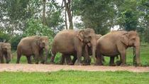Private Tour: Kuala Gandah Elephant Sanctuary and Batu Caves Tour from Kuala Lumpur with Lunch, ...