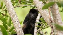 Costa Rican Wildlife: Palo Verde National Park Private Tour, Liberia, Nature & Wildlife