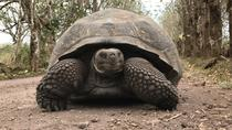 12-Day Galapagos Expedition on 4 Islands, Quito, 4WD, ATV & Off-Road Tours