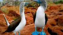 3 Day Classic Galapagos 2 Islands Hopping, Quito, 4WD, ATV & Off-Road Tours