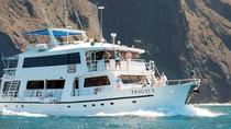 4- 5- or 8-Day Fragata Cruise, Galapagos Islands, Day Cruises