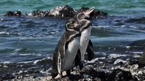 6-Day All Inclusive Galapagos Island Hopping, Galapagos Islands, Day Trips