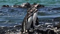 6-Day Galapagos Island Hopping, Galapagos Islands, Multi-day Tours