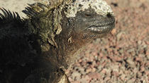 7-Day All Inclusive Galapagos 3 Islands Tour, Galapagos Islands, null