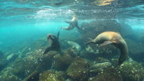 8-Day Galapagos Multi-Sport Deluxe, Galapagos Islands, Multi-day Tours