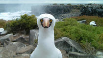 9-Day Galapagos Island Hopping and Quito Tour from Quito, Quito, Multi-day Tours