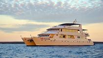 Galapagos Last-Minute Tourist or Superior Class Cruises, Galapagos Islands, Multi-day Cruises