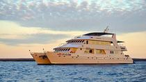 Last-Minute Discounted Galapagos 4-, 5, 7, or 8-day Cruise, Galapagos Islands, Multi-day Cruises