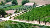 Villa Corano Winery Tour in Tuscany, Tuscany, Wine Tasting & Winery Tours