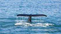 Whale Watching Cruise and Blue Lagoon Spa including Admission Fee and Transport, Reykjavik, Ports ...