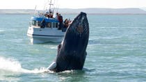 Whale Watching including Gullfoss and Geysir Express Tour from Reykjavik, Reykjavik, Dolphin & ...