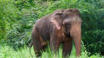 Sigiriya and Minneriya National Park (Vehicle Only Private Day Trip From Colombo), Colombo, Private...