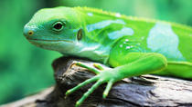 Sinharaja Rain Forest Walk and Bird Watching (All-Inclusive Private Day Trip From Colombo), ...